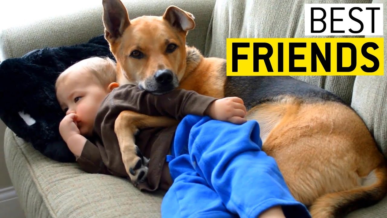 O prietenie adevărată: copiii și câinii